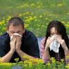 Imunološka preosjetljivost – Alergija